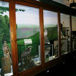 display of birds from district