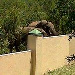 Elephants in the garden