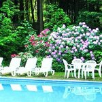 Reflections of  Rhododendrons by the pool