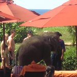 Baby Elephants greeting holiday makers