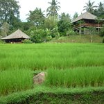 rice paddies on your doorstep