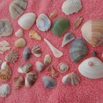 Various colours & shapes of Sea shells collected