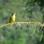 Weaver bird right outside