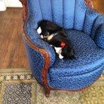 Tuxedo, the Resident Cat