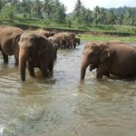 Elephant taking bath 2