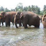 Elephant taking bath 3