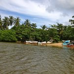 Mangrove Boat Tour-Day Tours