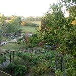 Früher Morgen im Garten, vom Obergeshoss augenommen