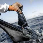 Sailfish on fly