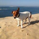 Doggy on the beach