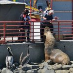 Feeding sea lions at the fab Valpo fish market  - with Cooking Classes Chile