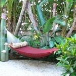 Palms garden hammock