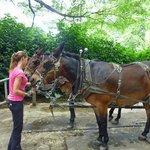 Calm mules