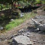 De krokodillen in de tuin van Los Lagos