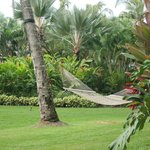 "beautiful gardens & ""our"" hammock"