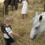 Meeting the farm animals