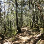 peaceful nature hike
