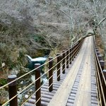 原生木が通行の妨げとなっていますが、展望台としての橋だから、問題ないようです。