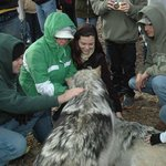Petting the wolves!