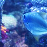 Aquariums delight with many different species of fish