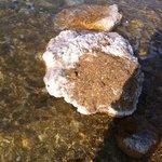 the salt deposits on the rocks in dead sea.