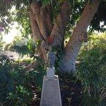 Beeidruckender Baum (inkl. Büste des ehemaligen Besitzers)