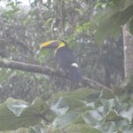 toucan in tree outside room