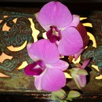 orchids by the bed