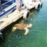 Turtle beach tour