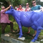 Taken the Bull By The Horns