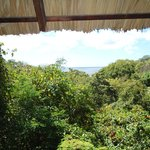 The view from our tree-house window!