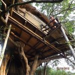 Treehouse #2 balcony