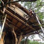 Treehouse #2 balcony