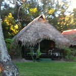 my bungalow again. sooo cute! roosters crowing and running about