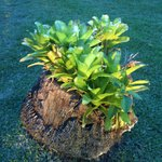 i like how this plant grew over the tree stump