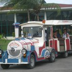 sightseeing train/bus