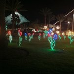 Flower Garden in the Festival of Lights