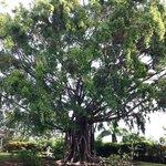 Stunning trees