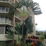 A Fan Tree
