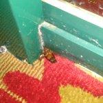 Roach!