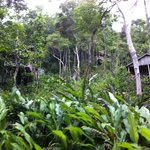 rooms set against the jungle