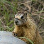 animal found in the Estes Park area