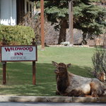 Photo de Wildwood Inn