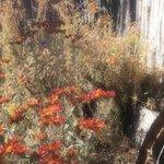 Native Plants Hacienda Vargas Grounds Jardines
