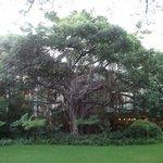 中庭の大きな木。
