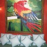 Notre chambre : Perroquet