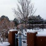 Christmas morning veiw of garden area!