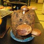 Fresh mushroom on the bark