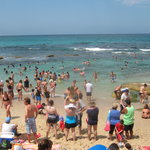 Bronte Rock Pool is Great for the Kids!