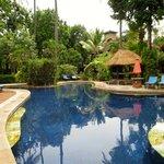 Pool in back garden